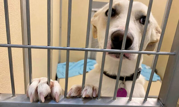Donations needed to help transfer animals out of state