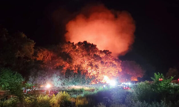 Late night fire scorches five acres of bosque in Los Chavez