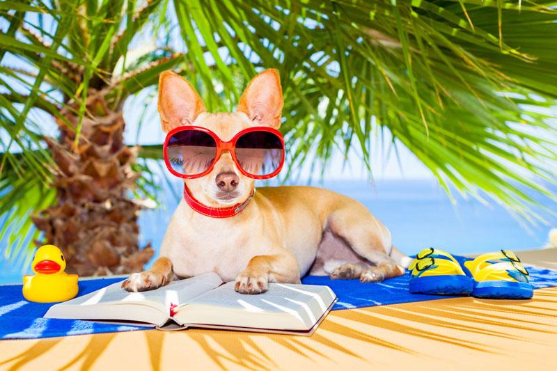 Summer reading programs at libraries