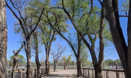 Bosque Farms Spring Clean Up