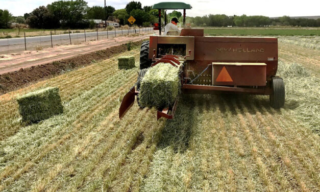 NMSU to host forage field day Sept. 21 at Los Lunas Science Center