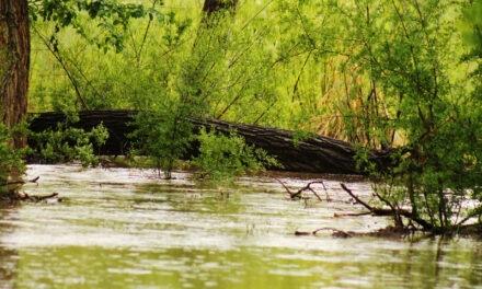MRGCD closes public access to levee roads, bosque