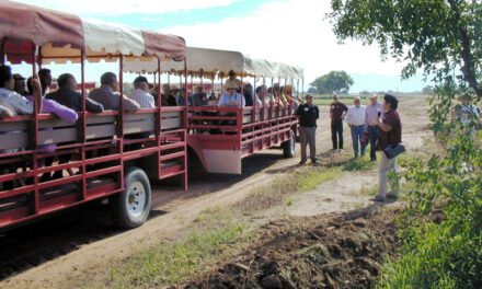 NMSU, USDA to host field day at Los Lunas Ag Science Center