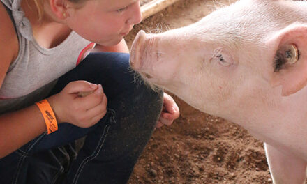 Valencia County Fair returns with new activities