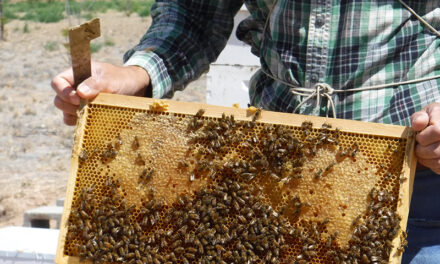 Learn more about bees, fruits and vegetables, crop research at Los Lunas field day Aug. 18