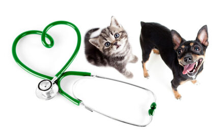 Pet Health Fair to offer free services in county