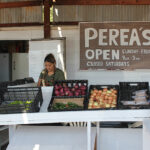 Perea Farms: 50 Years in Business & Chile Seasons