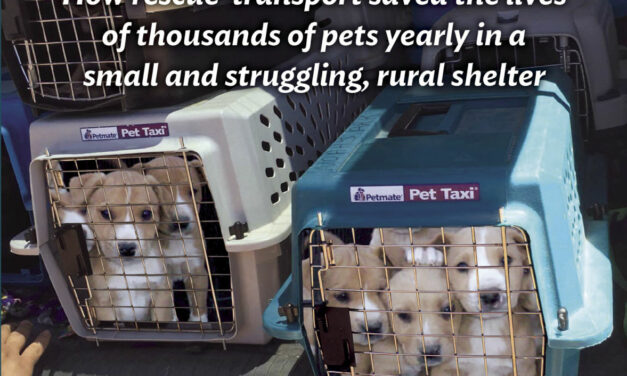 Author wins award for book on VC Animal Shelter